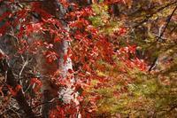 楠川付近の紅葉.jpg