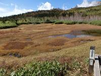 浮島湿原.jpg