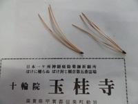 高野槙の三本葉.jpg