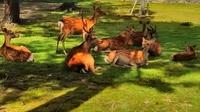 鹿さん (640x360).jpg
